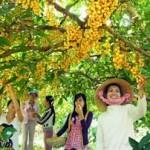 Du lịch miệt vườn ở Tiền Giang