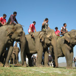 Sôi động lễ hội đua voi ở Tây Nguyên
