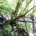 Du lịch Cát Bà – thăm quan rừng quốc gia nổi tiếng nhất ở đảo