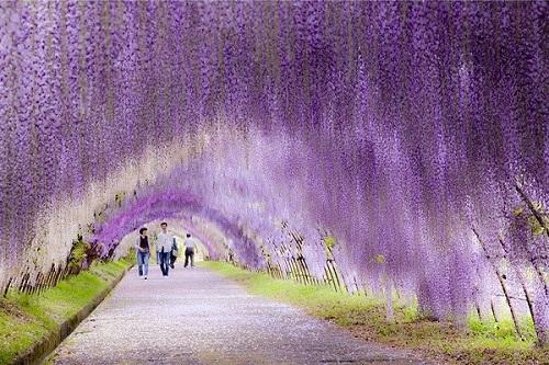Con đường tình yêu ở công viên Ashikaga