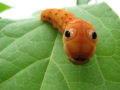 Cách phòng tránh côn trùng