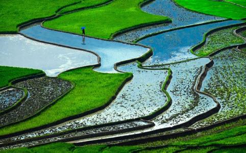 Ruộng bậc thang Việt Nam đứng thứ 6 trong top 10 cảnh quan đẹp nhất thế giới