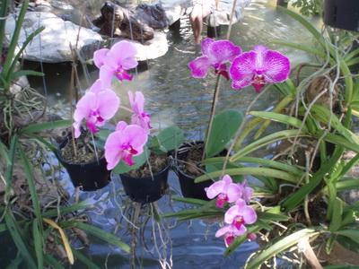 Suối Hoa Lan