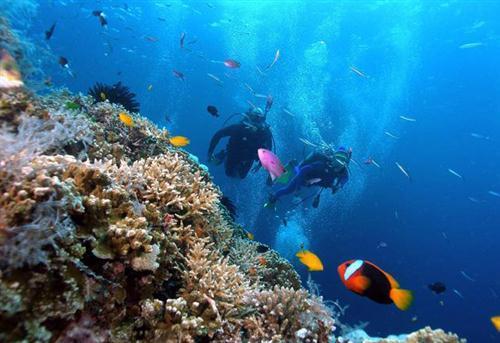 Lặn biển ngắm san hô ở vùng biển đảo Cát Bà