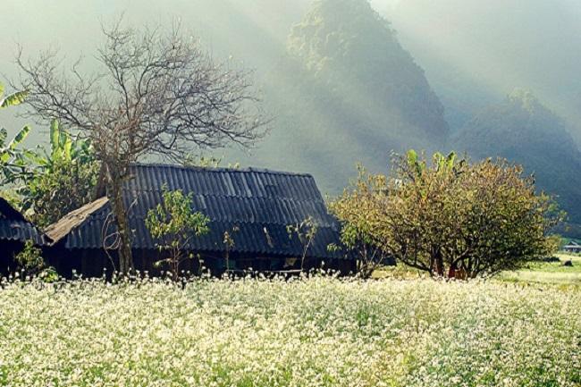 Các bản làng Mộc Châu nằm giữa thung lũng cánh đồng hoa