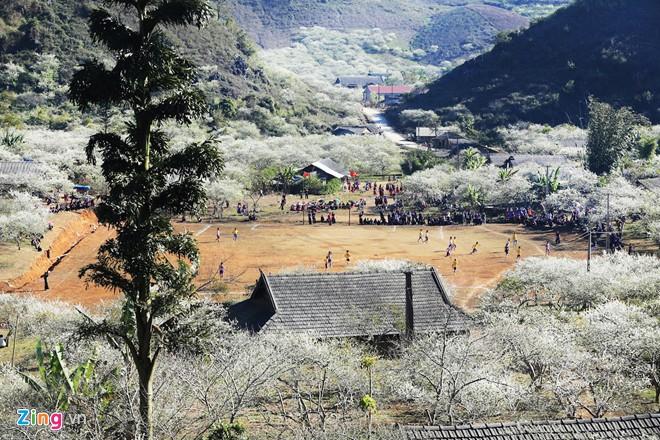 Hoa mận mọc trong thung lũng ở Mộc Châu