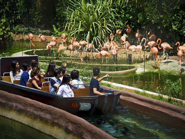 Khám phá điều thú vị tại River Safari