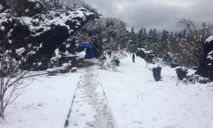 Tuyết rơi ở Sapa vào mùa đông
