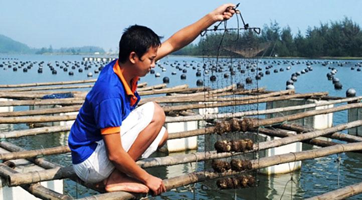 Cơ sở nuôi cấy ngọc trai ở Phú Quốc