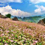 Thời điểm lý tưởng nhất để đi du lịch Hà Giang