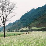 9 điểm du lịch sẽ không thể quên khi đến Mộc Châu