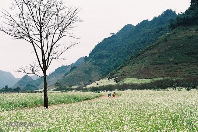 Hình ảnh vườn cải Ba Phách