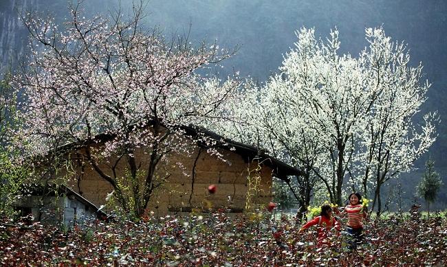 Mùa xuân cây cối trăm hoa đua nở